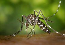 מתכוננים לקיץ: הדרך הפשוטה להרחקת יתושים