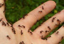 לך אל הנמלה!